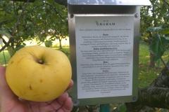 Apfel-Graham