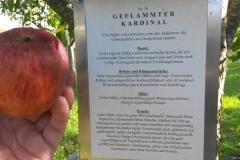 Apfel-Kardinal