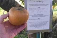 Apfel-Zabergau