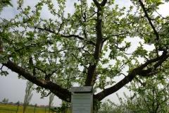Obstlehrgarten2013-Schoeneberger